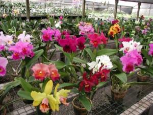 orquidea - orquidario2