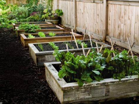 Adubo ogânico e barato para a horta caseira.